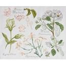 Borduurpatroon DMC No 2 (14561f) fleur & botanique - prunes et jasmin
