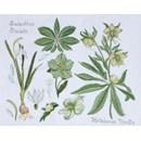 DMC No 2 patroon (14561e) fleur & botanique - hellebore et perce-neige (op=op)