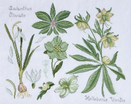 Dmc No 2 Patroon 14561e Fleur Botanique Hellebore Et Perce Neige
