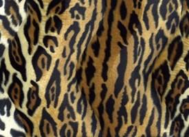 Velboa 01 dierenprint luipaard (50 cm)