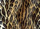 Velboa 01 dierenprint luipaard (25 cm)