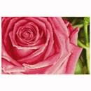 Borduurpakket DMC rose BK1336