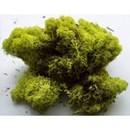 Ijslandsemos licht groen (25 gram)