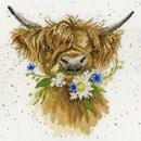Borduurpakket dieren - Daisy Coo