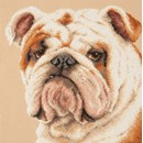 Borduurpakket hond - Bulldog