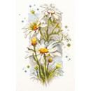 Borduurpakket bloemen White daisies