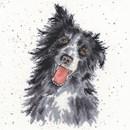 Borduurpakket hond - Collie