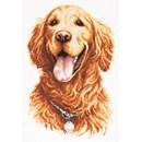 Borduurpakket hond - Golden retriever