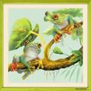 Borduurpakket dieren frogs