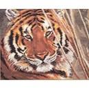 Borduurpakket dieren - Tiger AL-1-08 (op=op)