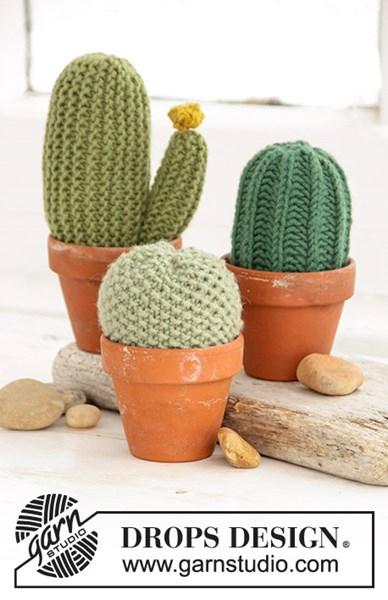 Breipatroon Cactus