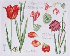 Tulipe et cyclamen