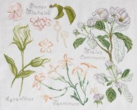 Prunus et jasmin