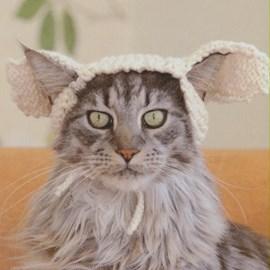 Konijnenoren voor een kat is het niet ....