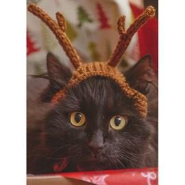 Super schattig kattengewei!