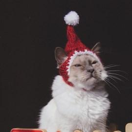 Kerstmuts voor de katten om in de ....