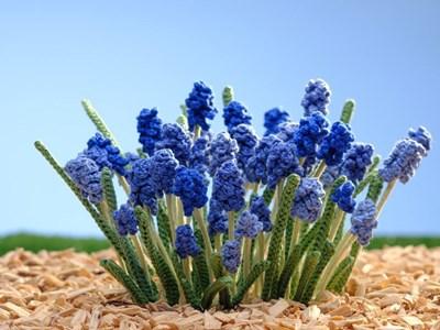 Haakpatroon Blauw druifje