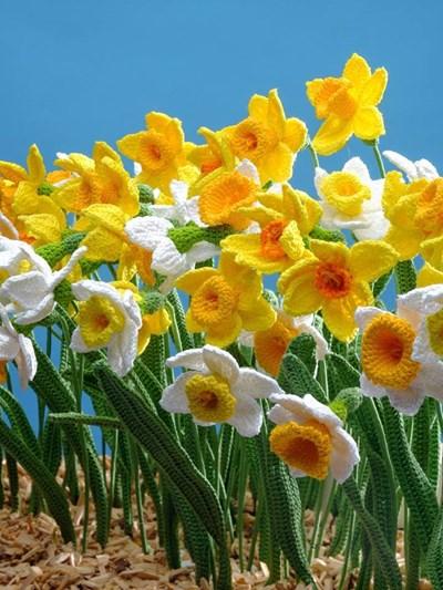 Haakpatroon Narcissen